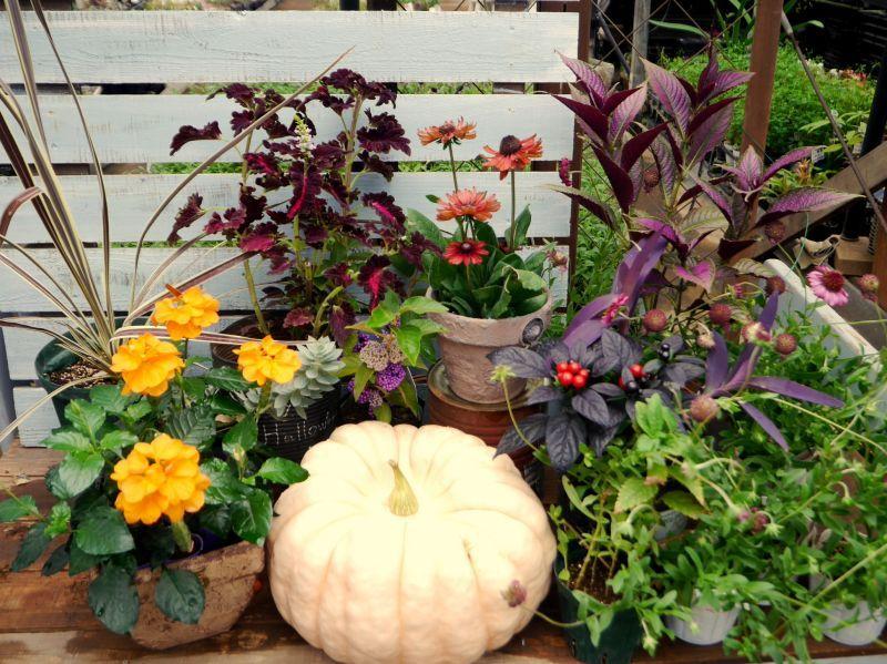 農園、徐々に秋へ移行中〜♪