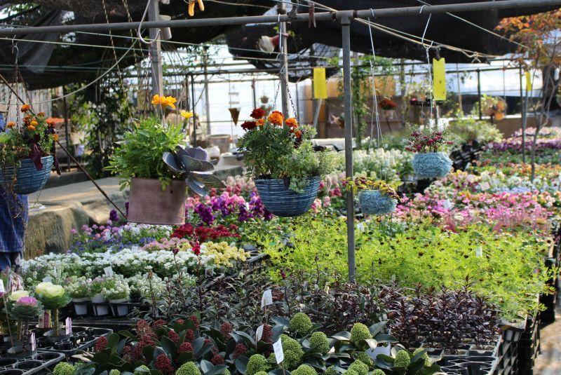 11月の農園*冬〜春のお花がそろっています♪