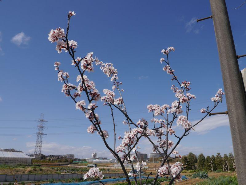 ㊗️色々なお花🌸開花宣言♪